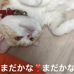 マッタリ/撫でてポーズ/猫/フォロー大歓迎 おはようございます☁️ 今日も2ニャンに…(4枚目)