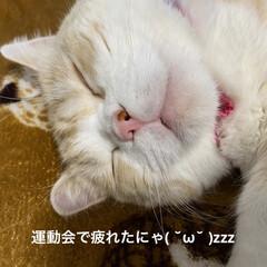 雑貨屋さんのお花/動物大好き/ニャンズの寝顔/こむぎ/せんぶちょ/お花/... おはようございます♡  すっかりお店のお…(6枚目)