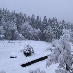 田舎/部屋から見える景色/雪