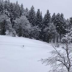 我が家からの風景/雪/雪景色/雪国