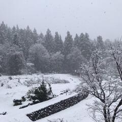 田舎/雪/窓から見える景色 朝に比べてだいぶ降り方が強くなってきまし…(2枚目)