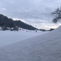 玄関前/田舎/雪景色 今日も1mくらい積もりそう。゚゚(*´□…