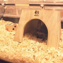 手作り/夜行性/とびばこ/ハリネズミのいる暮らし/セリア ハリネズミを飼っています。 夜行性なので…