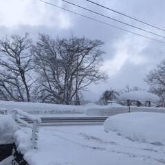 寒い日/雪景色/雪国