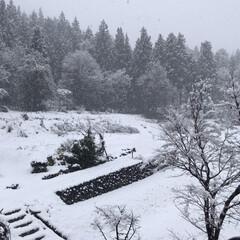 田舎/雪/窓から見える景色 朝に比べてだいぶ降り方が強くなってきまし…(1枚目)