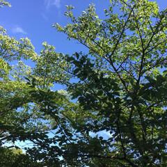 景色/空/緑 玄関側のベランダからの景色 暑いけど空は…
