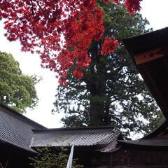富士吉田市/旅行/神社/仏閣/歴史建造物/建築/... 富士吉田市の「北口本宮富士浅間神社」は、…