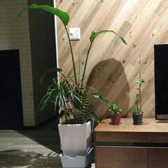 ボタニカル 初めての観葉植物
