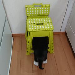 うちの子ベストショット2018/ペット/猫/キッチン/レイちゃん/後ろ姿/... 後ろ姿で失礼致します(^^;)『頭隠して…(1枚目)