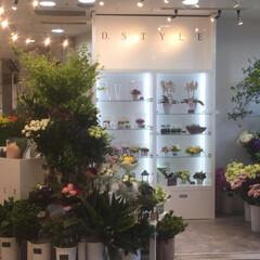 リノベーション/フラワーショップ/花屋 商業施設に入っているフラワーショップの設…