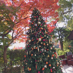 八芳園/クリスマスツリー/紅葉/秋/風景 八芳園の紅葉🍁とクリスマスツリー🎄です …(1枚目)