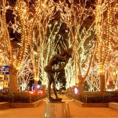 フォロー大歓迎/クリスマス/クリスマスツリー/旅行/風景 仙台のケヤキ並木!年末まで光ってるそうで…