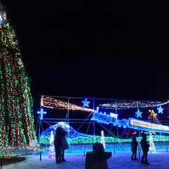 おうち/2018/フォロー大歓迎/クリスマス/クリスマスツリー/旅行/... 小岩井農場のクリスマスはトナカイじゃなく…(2枚目)