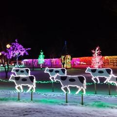 おうち/2018/フォロー大歓迎/クリスマス/クリスマスツリー/旅行/... 小岩井農場のクリスマスはトナカイじゃなく…(1枚目)