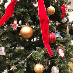 おうち/2018/フォロー大歓迎/クリスマス/クリスマスツリー/旅行/... ホンギのクリスマスライブ🎅に行きました💞…(2枚目)