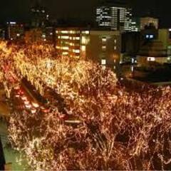 フォロー大歓迎/クリスマス/クリスマスツリー/旅行/風景 仙台のケヤキ並木!年末まで光ってるそうで…(2枚目)