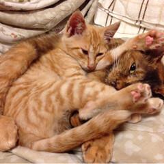 春のフォト投稿キャンペーン/LIMIAペット同好会/LIMIAおでかけ部/フォロー大歓迎/ペット/猫/... うちの《コニャン》が子猫だった時のショッ…