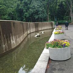 新宿中央公園/公園散歩/公園 新宿中央公園(4枚目)