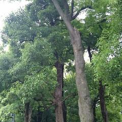 新宿中央公園/公園散歩/公園 新宿中央公園(3枚目)
