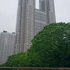 新宿中央公園/公園散歩/公園 新宿中央公園