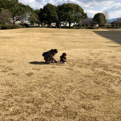公園/芝/冬/おでかけ/風景 少し遠い公園に来ました☆芝が広がっていて…