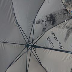 傘/ダイソー ダイソーで買った傘☔ 可愛い❤️日傘にも…