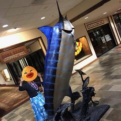 ハワイ島 カジキ釣り上げ競争で優勝したもの みたい…