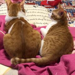 ペット/猫/うちの子ベストショット 後ろ姿だけど、愛くるしくて可愛い(*^^…(1枚目)