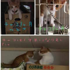 ペット/猫 チャコの3ヶ月の時とチョコの現在を比べて…(1枚目)