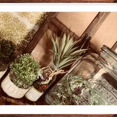 飾り窓/瓶/リサイクル/DIY/雑貨/インテリア/... 飾り窓と、リサイクル瓶で飾って見ました。…