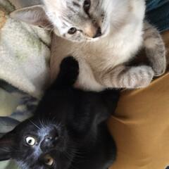 甘えん坊達/ペット/猫 昨日、早朝から夜まで留守にしていました。…