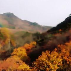 高速道路/山/霧でできた虹🌈/霧/紅葉/トンネルの先/... トンネルを抜けたらその先は………   先…