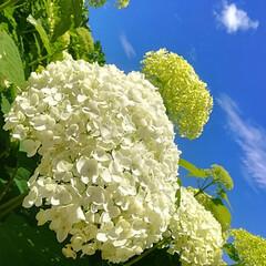 空/紫陽花/雨季ウキフォト投稿キャンペーン/おでかけ/風景 紫陽花祭り、リベンジしてきました\(^o…
