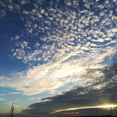 羊雲/夕方/雲/空 羊雲。夕方の空。 見惚れて、信号待ちでパ…(2枚目)