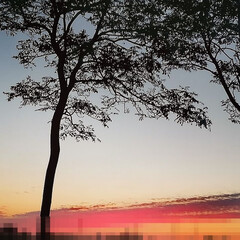 空/夕焼け/雲/流星 帰宅中、流星のような面白い雲発見。  こ…