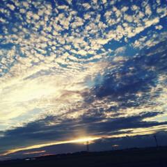 羊雲/夕方/雲/空 羊雲。夕方の空。 見惚れて、信号待ちでパ…(1枚目)