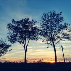 空/夕焼け 夕焼け。  今年はなんか空がいつもよりキ…