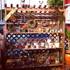 DIY/ガーデン/ガーデニング/多肉鉢/多肉植物/多肉植物寄せ植え/... 5月だと言うのに真夏日の中、汗💦をダラダ…