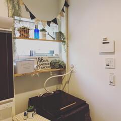 サリュ雑貨/スリーコインズ/洗濯機の上/洗濯機まわり/フェイクグリーン/ニトリ/... ラブリコで作った棚(*´꒳`*) ブライ…