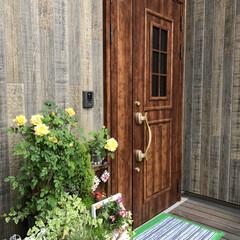 LIXILの玄関ドア/ポーチライト/ツバメのフン対策/ツバメの観察/ツバメの巣/バラの花/... 今年も我が家の玄関に、ツバメたちが巣作り…