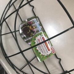 ガーデニング雑貨/根菜類/サツマイモ/常温保存可野菜/見せる収納/タカラスタンダード/... 常温保存可の野菜や果物は、 DAISOの…(2枚目)