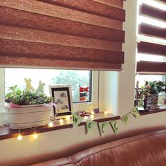 和モダンインテリア/DIYのリビングテーブル/DIYのある暮らし/ニトリの調光ロールスクリーン/ニトリのレザーソファー/窓辺の風景/... 多肉植物とハンドメイド作品の有るリビング…