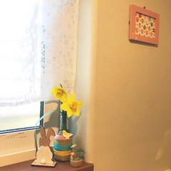 空き瓶リメイク/水仙/花のあるくらし/トイレディスプレイ/桜柄/カフェカーテン/... トイレにも春を🌸 セリアのウサギ雑貨 a…