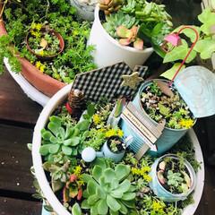 土にまくだけ虫退治/アース製薬/観葉植物のある暮らし/ソーラーライト/ウッドデッキのある家/ウッドデッキ/... 7月なのに涼しいお天気が続いてます。 暑…