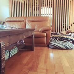 DIYのリビングテーブル/DIYのある暮らし/レザーソファー/格子戸/和モダンインテリア/和モダン/... ペットと暮らしやすい家 ペットがストレス…