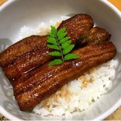 鰻/土用の丑の日 鰻を食べて 夏の暑さを吹っ飛ばそう!!!…