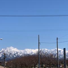 春ですね/お散歩/風景 霜が降りるほど冷え込んだのは 放射冷却現…(2枚目)