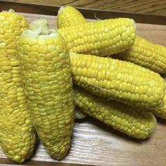 とうもろこし🌽/グルメ/フード 今朝収穫🌽 粒は疎らで小さいけれど、あま…