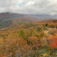 ゴンドラの空中散歩/白馬岩岳/安曇野/ランチ/紅葉狩り/おでかけ/... 今日から11月 今年もあと2か月  先週…