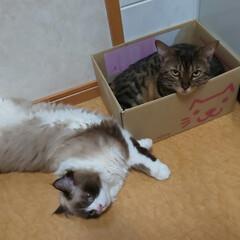 かわいい娘と息子/ねこのきもち/ねこまみれ/ねこ/ネコ/猫 みにゃさん、おはようございにゃす。くるみ…